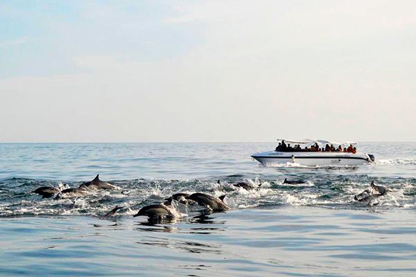 piura ballenas DELFINES